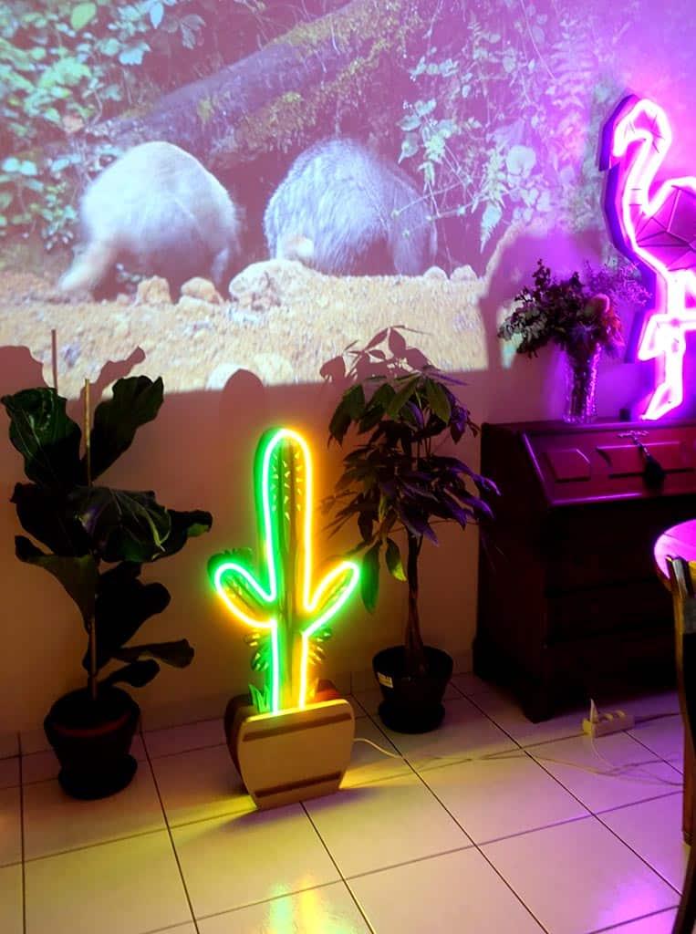 néon sur mesure et scénographie Cactus
